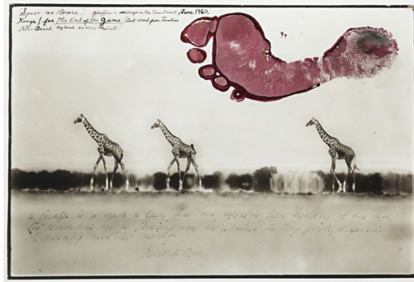 Peter Beard, Giraffes in Mirage on the Taru Desert